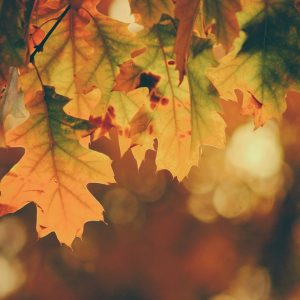 Autumn Colours Mindfulness Course St Albans
