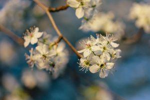 Mindfulness, meditation, blossom, Spring