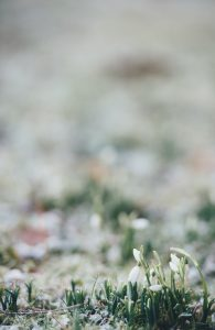 snowdrops, mindfulness, reconnecting